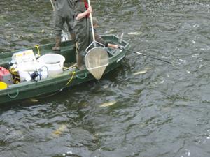 Electro Fishing