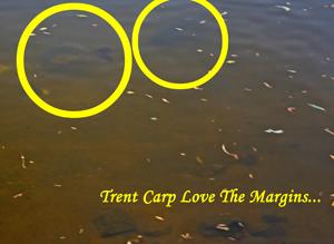 margin-carp
