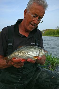 Canal Roach