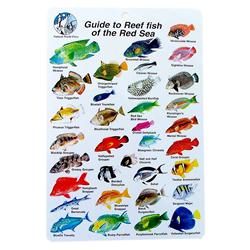 2012 november blog bob roberts fishing information for Types of red fish