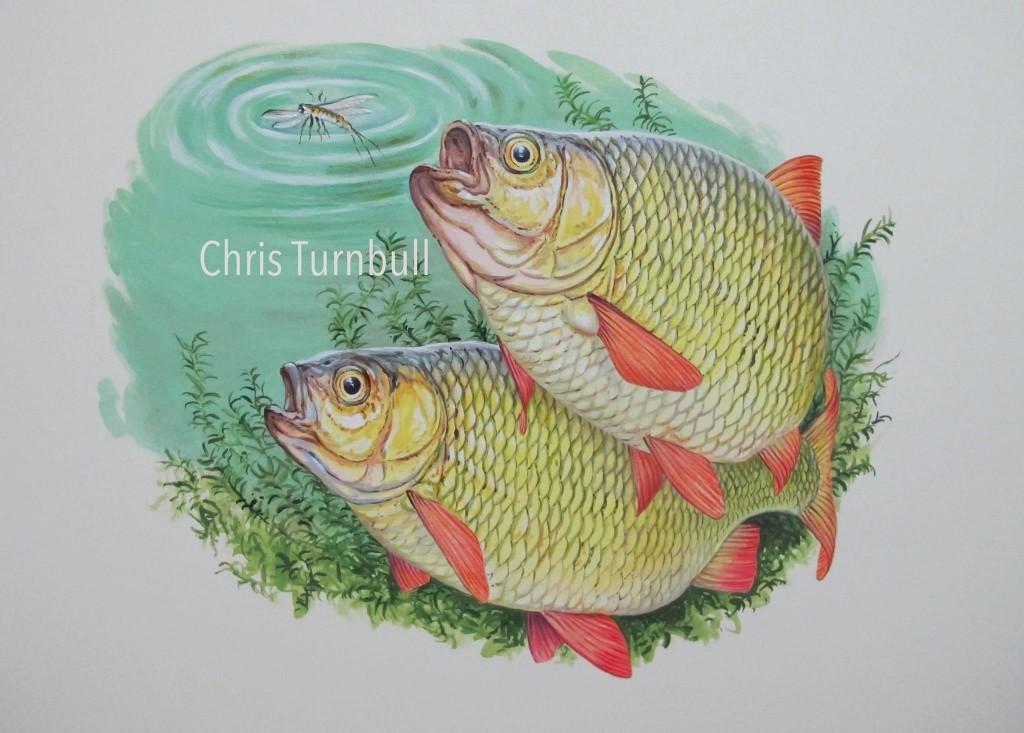 Turnbull Rudd