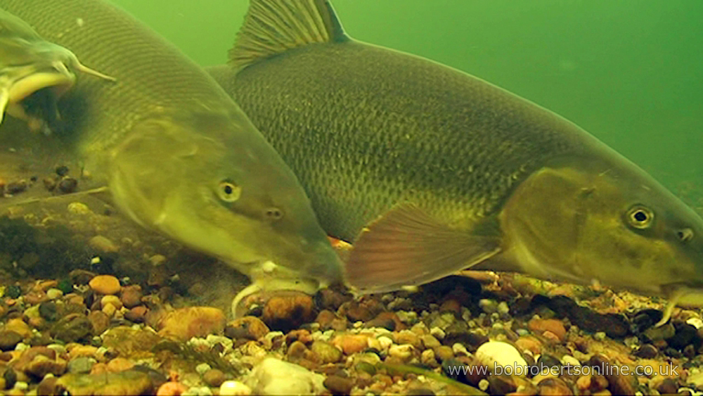 More Free Screensavers – Bob Roberts – Fishing information